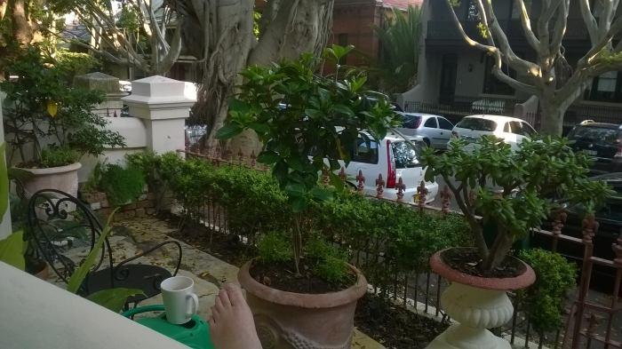 The front garden/courtyard at Paddington
